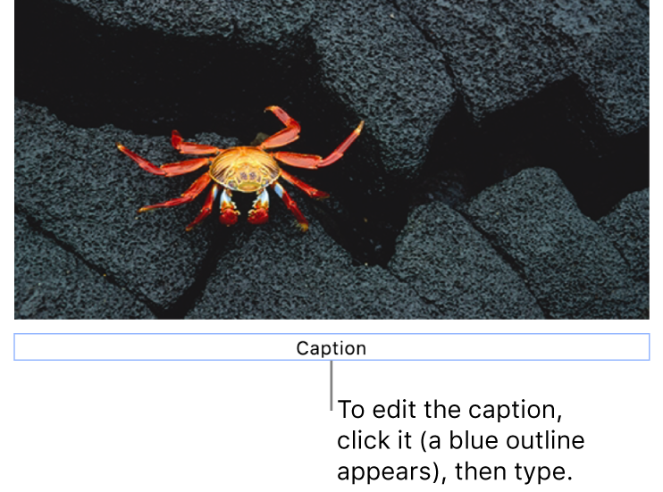 "The placeholder caption, ""Caption"", appears below a photo; a blue outline around the caption field shows it's selected."