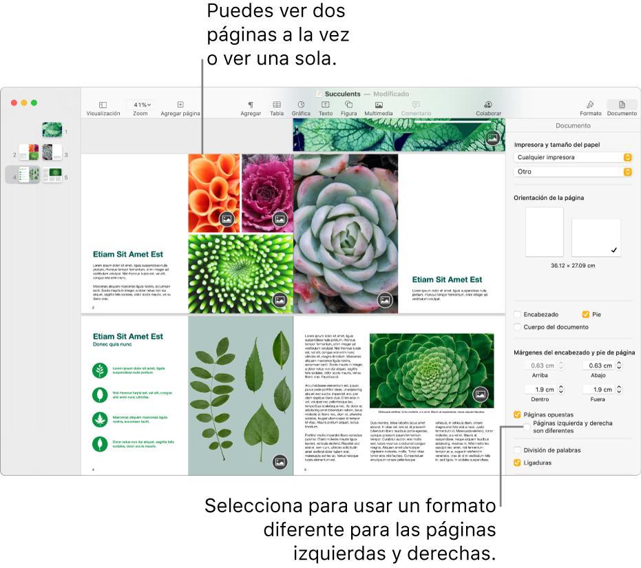 """La ventana de Pages con las miniaturas de las páginas y las páginas del documento en visualización de dos páginas. La casilla """"Las páginas izquierda y derecha son distintas"""" no está marcada en la barra lateral Documento que se encuentra la derecha."""