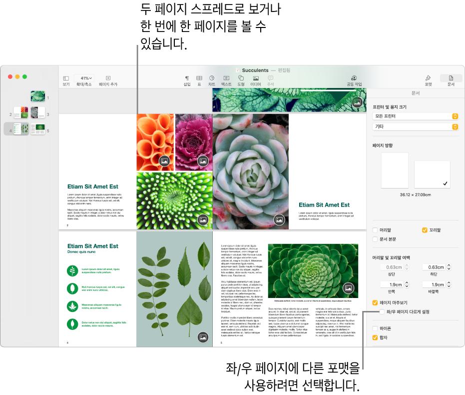 페이지 축소판과 두 페이지 스프레드로 보이는 문서 페이지가 있는 Pages 윈도우. 오른쪽의 문서 사이드바에서 '좌/우 페이지 다르게 설정' 체크상자 선택이 해제됨.