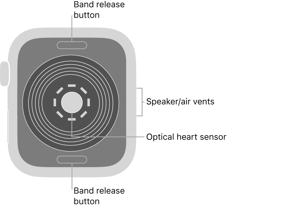 The back of Apple Watch SE, with the band release buttons at top and bottom, the optical heart sensor in the middle, and the speaker/air vents on the side.