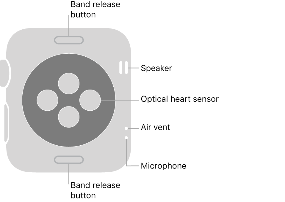 The back of Apple Watch Series 3, with the band release buttons at top and bottom, the optical heart sensors in the middle, and the speaker, air vent, and microphone from top to bottom near the side.