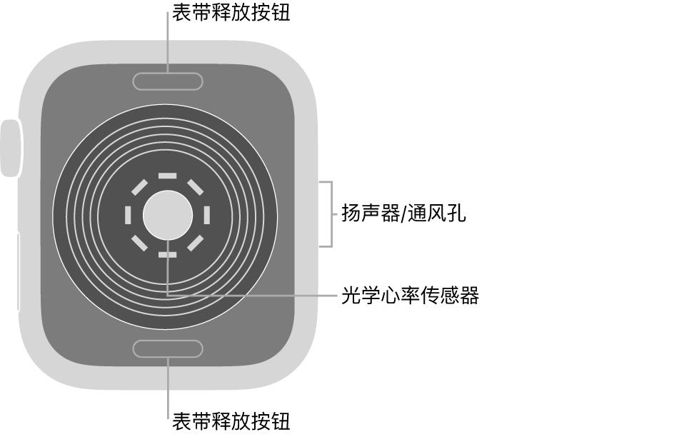 AppleWatchSE 的背面,顶部和底部是表带释放按钮,中间是光学心率传感器,侧边是扬声器/通风孔。