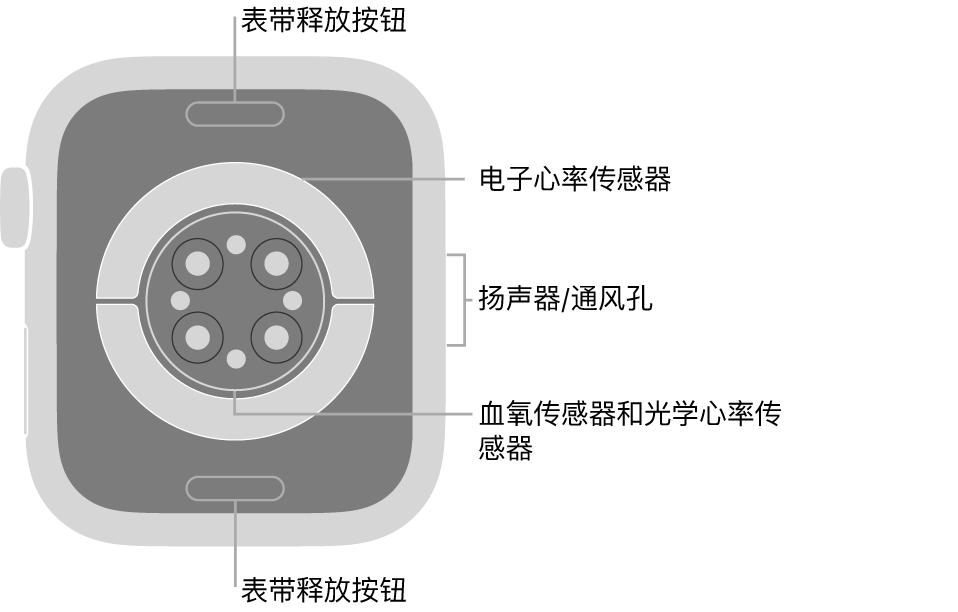 AppleWatch Series6 的背面,顶部和底部是表带释放按钮,中间是电子心率传感器、光学心率传感器和血氧传感器,侧边是扬声器/通风孔。