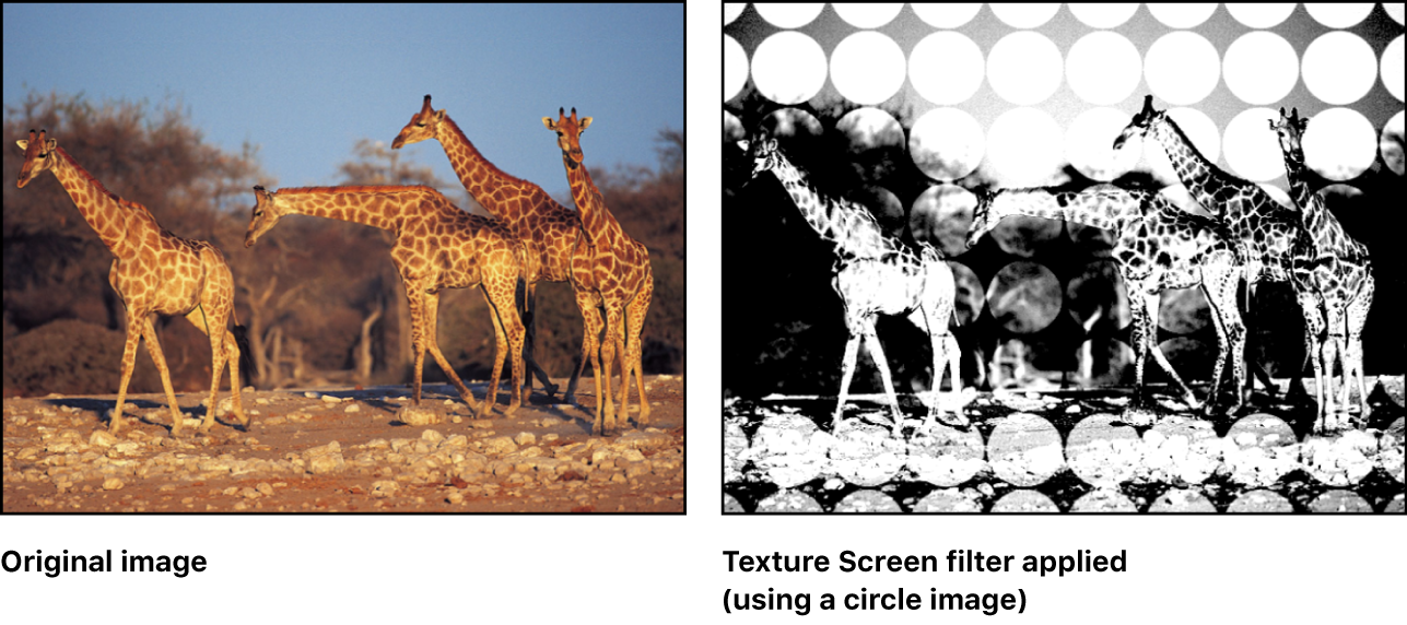Canvas showing effect of Texture Screen filter