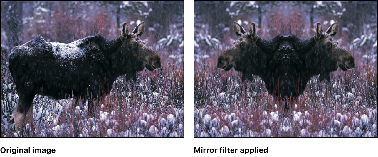 Canvas showing effect of Mirror filter