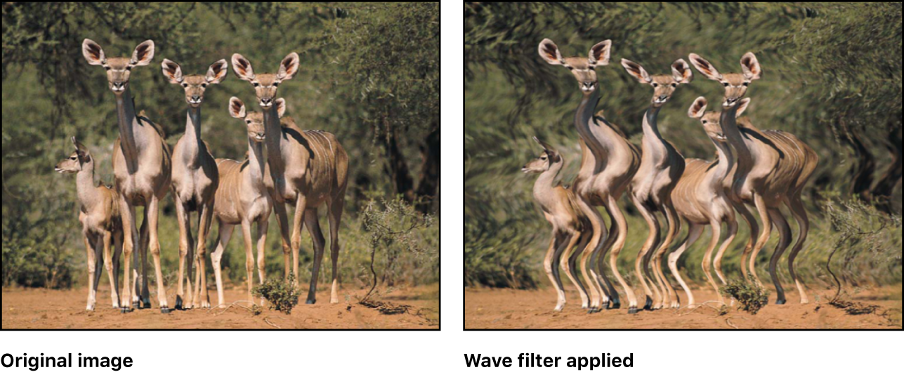 Canvas showing effect of Wave filter
