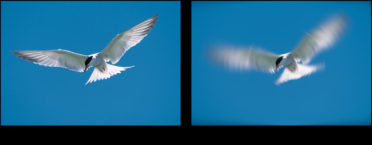 Canevas affichant l'effet du filtre Flou radial