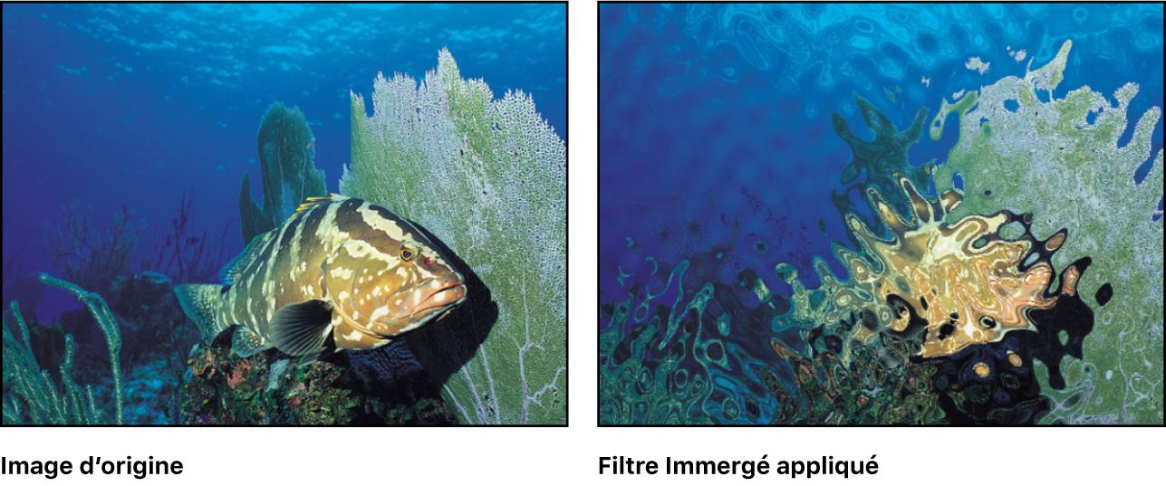 Canevas affichant l'effet du filtre Immergé
