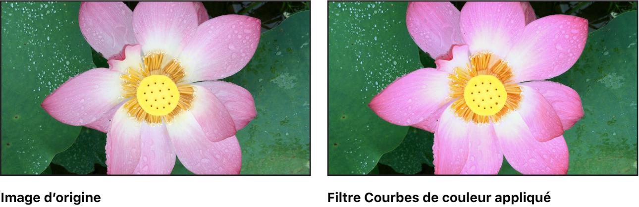 Canevas affichant l'effet du filtre Courbes de couleur