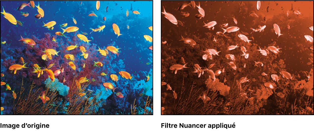 Canevas affichant l'effet du filtre Teinte