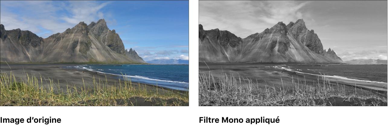 Canevas affichant l'effet du filtre Mono