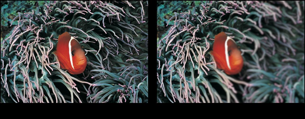 Canevas affichant l'effet du filtre Flou dégradé