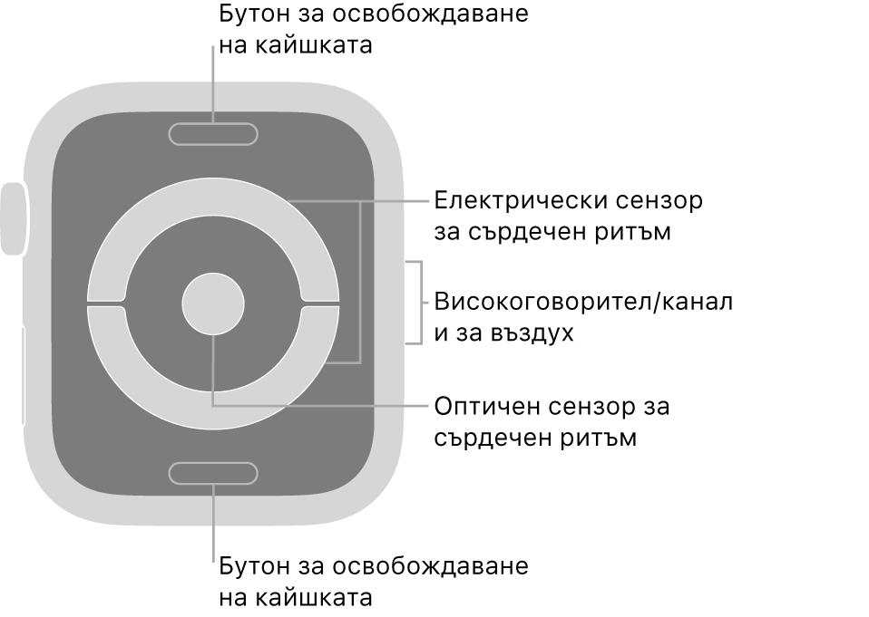 Задната страна на Apple Watch Series 4 и Apple Watch Series 5 с бутоните за освобождаване на каишката горе и долу, оптическите сензори за сърдечен ритъм в средата и говорителя/въздушната клапа встрани.