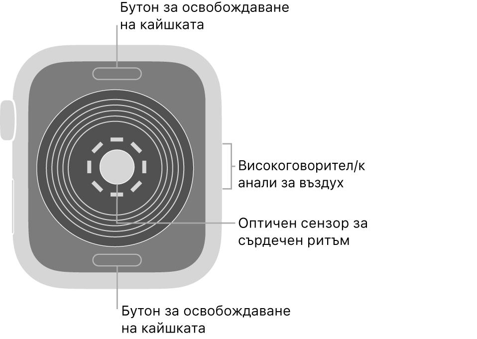 Задната страна на AppleWatchSE с бутоните за освобождаване на каишката горе и долу, оптическия сензор за сърдечен ритъм в средата и говорителя/вентилационния отвор встрани.