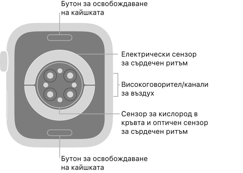 Задната страна на AppleWatch Series6 с бутоните за освобождаване на каишката горе и долу, електрическите сензори за сърдечен ритъм, оптическите сензори за сърдечен ритъм и сензорите за нивото на кислород в кръвта в средата и говорителя/въздушната клапа встрани.