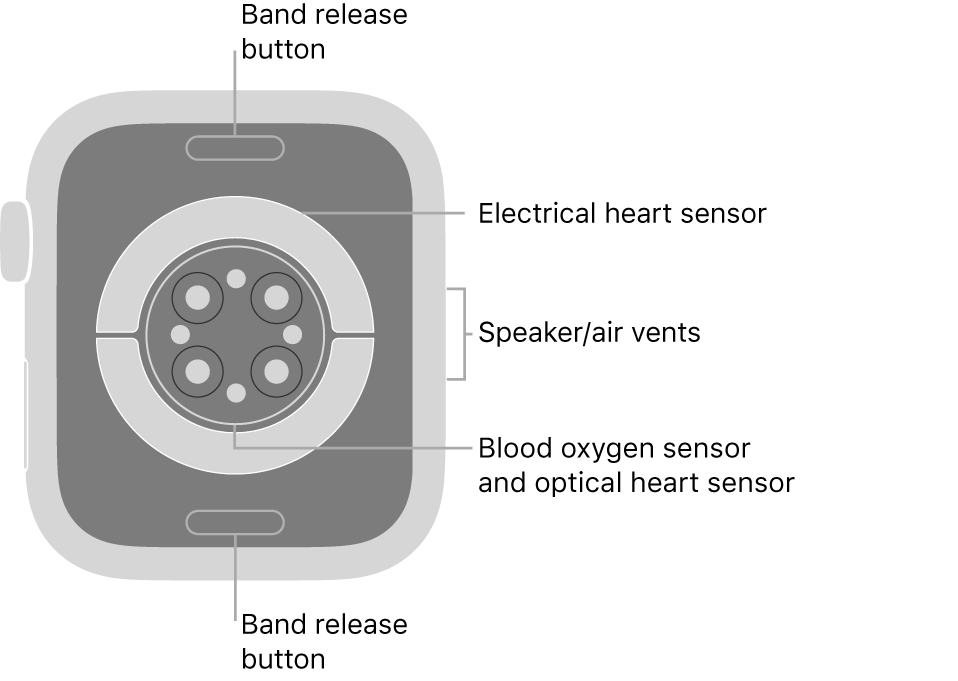 The back of AppleWatch Series6, with the band release buttons at top and bottom, the electrical heart sensors, optical heart sensors, and blood oxygen sensors in the middle, and the speaker/air vents on the side.