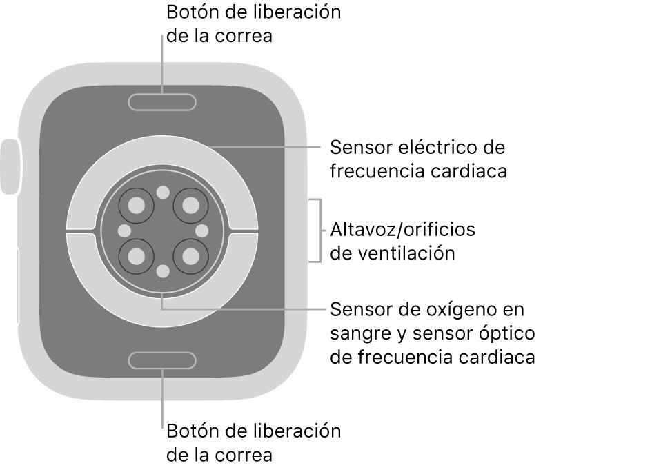 La trasera del AppleWatch Series6, con los botones de liberación de la correa arriba y abajo, los sensores eléctricos de frecuencia cardiaca, los sensores ópticos de frecuencia cardiaca y los sensores de los niveles de oxígeno en sangre en el medio, y el altavoz/orificios de ventilación en el lateral.