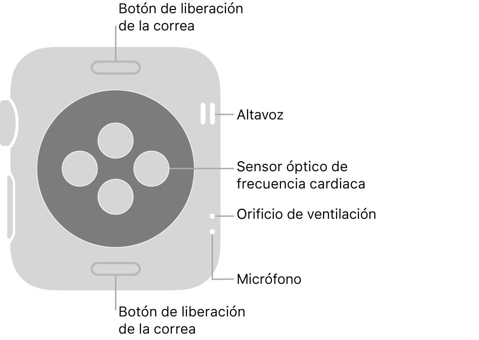 La trasera del AppleWatch Series3, con los botones de liberación de la correa arriba y abajo, los sensores ópticos de frecuencia cardiaca en el medio, y el altavoz, el orificio de ventilación y el micrófono de arriba abajo cerca del lateral.