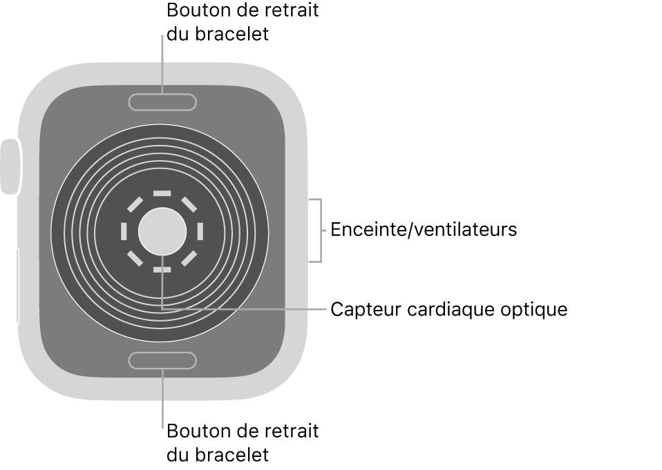 L'arrière de l'AppleWatchSE, avec les boutons de retrait du bracelet en haut et en bas, le capteur optique de fréquence cardiaque au milieu, ainsi que le haut-parleur et les aérations sur le côté.