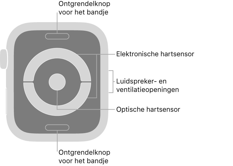 De achterkant van de AppleWatch Series4 en AppleWatch Series5, met aan de boven- en onderkant de ontgrendelknoppen van het bandje, in het midden de elektrische hartsensoren en optische hartsensor, en aan de zijkant de luidspreker- en ventilatieopeningen.
