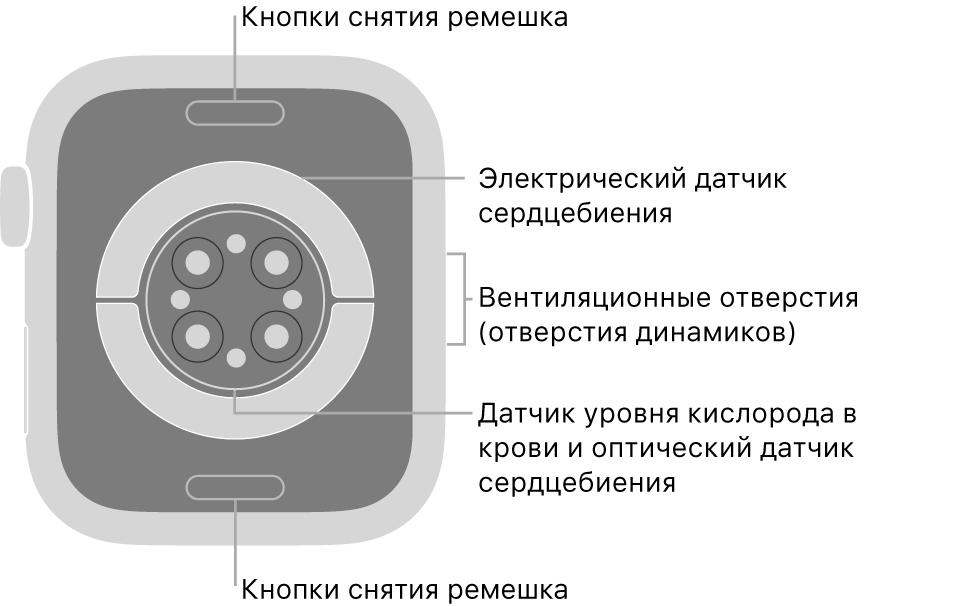 Оборотная сторона AppleWatch Series6. Показаны кнопки снятия ремешка вверху ивнизу, электрические датчики сердечной активности, оптические датчики сердечной активности идатчики уровня кислорода вкрови вцентре, атакже вентиляционные отверстия (отверстия динамиков) сбоку.