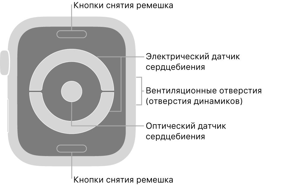 Оборотная сторона AppleWatch Series4 иAppleWatch Series5. Показаны кнопки снятия ремешка вверху ивнизу, электрические датчики сердцебиения иоптический датчик сердцебиения поцентру, атакже вентиляционные отверстия (отверстия динамиков) сбоку часов.
