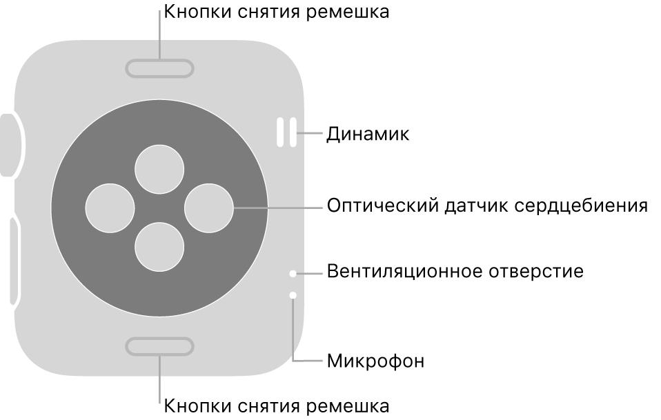 Оборотная сторона AppleWatch Series3. Показаны кнопки снятия ремешка вверху ивнизу, оптические датчики сердцебиения поцентру, атакже (сверху вниз) динамик, вентиляционное отверстие имикрофон сбоку.