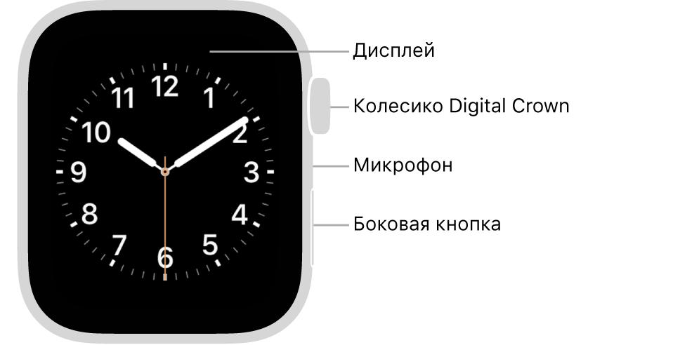 Лицевая сторона AppleWatch Series6. Надисплее показан циферблат. Сбоку накорпусе часов показаны (сверху вниз): колесико DigitalCrown, микрофон ибоковая кнопка.