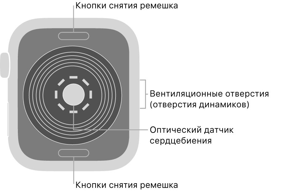 Оборотная сторона AppleWatchSE. Показаны кнопки снятия ремешка вверху ивнизу, оптический пульсометр вцентре, атакже вентиляционные отверстия (отверстия динамиков) сбоку.