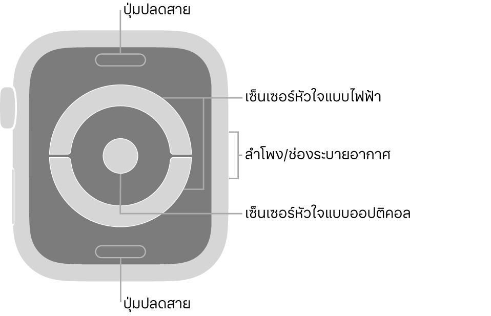 ด้านหลังของ Apple Watch Series 4 และ Apple Watch Series 5 ที่มีปุ่มปลดสายที่ด้านบนสุดและที่ด้านล่างสุด เซ็นเซอร์หัวใจแบบไฟฟ้าและเซ็นเซอร์หัวใจแบบออปติคอลที่ตรงกลาง และลำโพง/ช่องระบายอากาศที่ด้านข้างของนาฬิกา