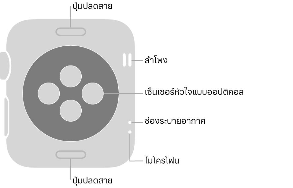 ด้านหลังของ Apple Watch Series 3 ที่มีปุ่มปลดสายที่ด้านบนสุดและที่ด้านล่างสุด เซ็นเซอร์หัวใจแบบออปติคอลที่ตรงกลาง และลำโพง/ช่องระบายอากาศใกล้ๆ กับด้านข้างของนาฬิกาจากด้านบนสุดถึงด้านล่างสุด