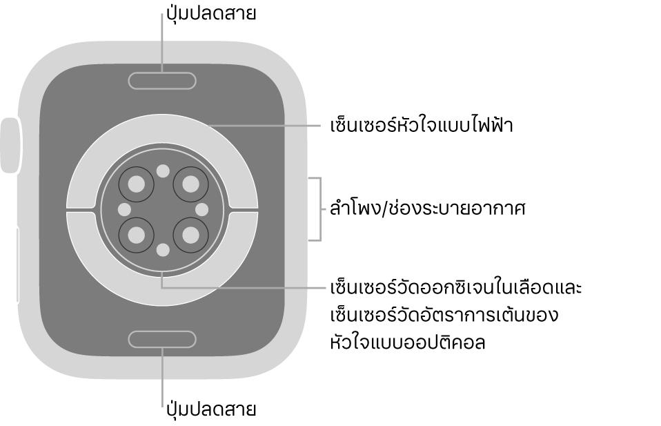 ด้านหลังของ AppleWatch Series6 ที่มีปุ่มปลดสายที่ด้านบนสุดและที่ด้านล่างสุด เซ็นเซอร์หัวใจแบบไฟฟ้า เซ็นเซอร์หัวใจแบบออปติคอล และเซ็นเซอร์ออกซิเจนในเลือดที่ตรงกลาง และลำโพง/ช่องระบายอากาศที่ด้านข้าง