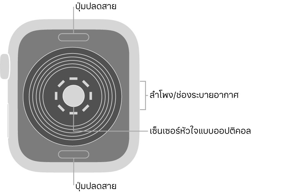 ด้านหลังของ AppleWatchSE ที่มีปุ่มปลดสายที่ด้านบนสุดและที่ด้านล่างสุด เซ็นเซอร์หัวใจแบบออปติคอลที่ตรงกลาง และลำโพง/ช่องระบายอากาศที่ด้านข้าง
