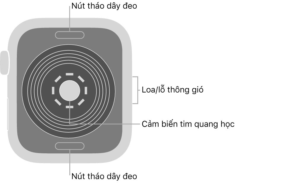 Mặt sau của AppleWatchSE, với các nút tháo dây ở trên cùng và dưới cùng, các cảm biến tim quang học ở giữa và loa/lỗ thông gió trên sườn.