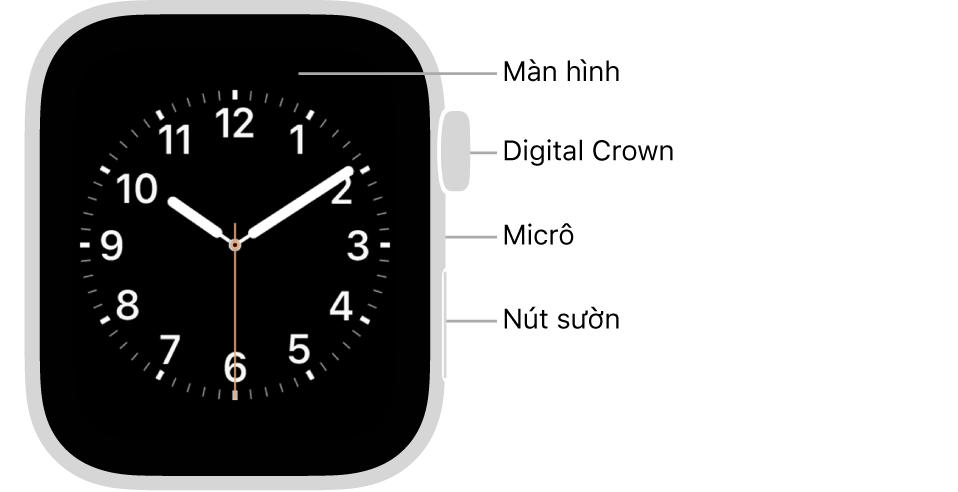 Mặt trước của AppleWatch Series6, với màn hình đang hiển thị mặt đồng hồ và Digital Crown, micrô và nút sườn từ trên xuống dưới trên sườn của đồng hồ.