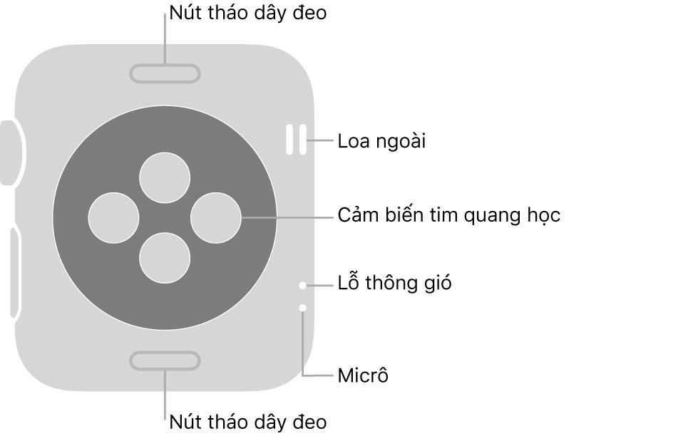 Mặt sau của Apple Watch Series 3, với các nút tháo dây ở trên cùng và dưới cùng, các cảm biến tim quang học ở giữa, cùng với loa, lỗ thông gió và micrô từ trên xuống dưới ở gần sườn.