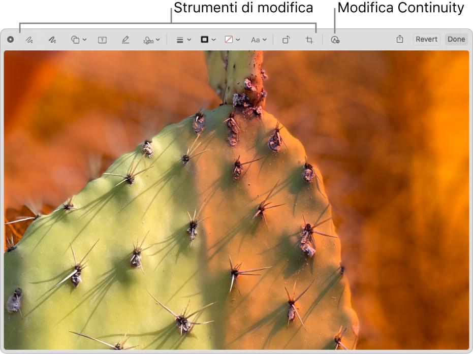 Un'immagine nella finestra Modifica con la barra degli strumenti di Modifica e lo strumento per fare clic e utilizzare Modifica di Continuity su un iPhone o iPad nelle vicinanze.
