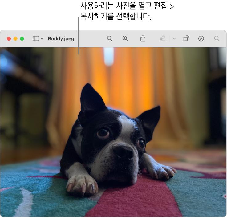 복사하려는 그림이 표시된 미리보기 앱.