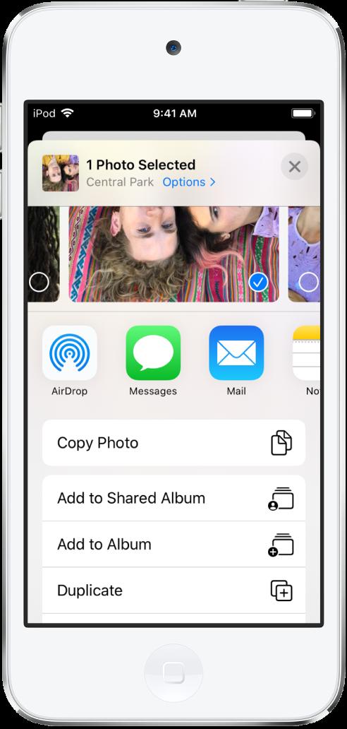 Tela de compartilhamento do app Fotos. A foto selecionada está na parte superior da tela. Abaixo das fotos, as opções de compartilhamento. Abaixo das opções de compartilhamento, uma lista de ações, de cima para baixo: Copiar Foto, Álbum Compartilhado, Adicionar ao Álbum e Duplicar.
