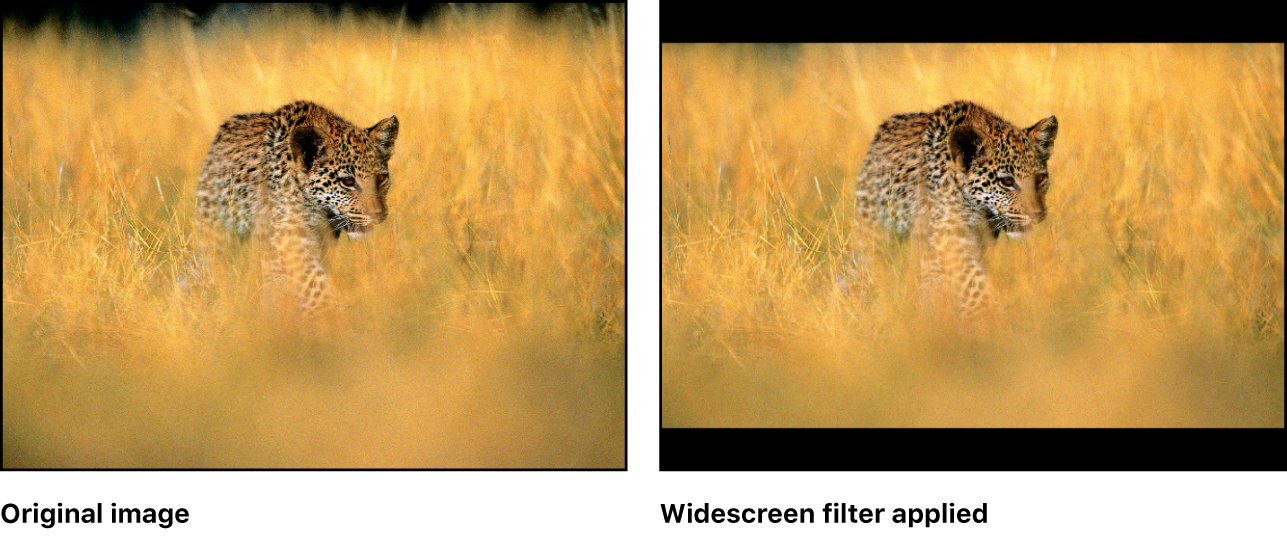 Canvas showing effect of Widescreen filter
