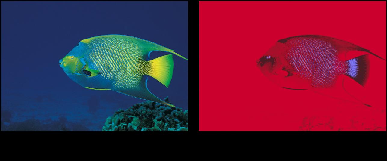 Canevas affichant l'effet du filtre Réduction des couleurs