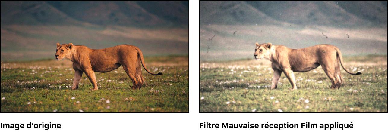 Canevas montrant l'effet du filtre Mauvais film
