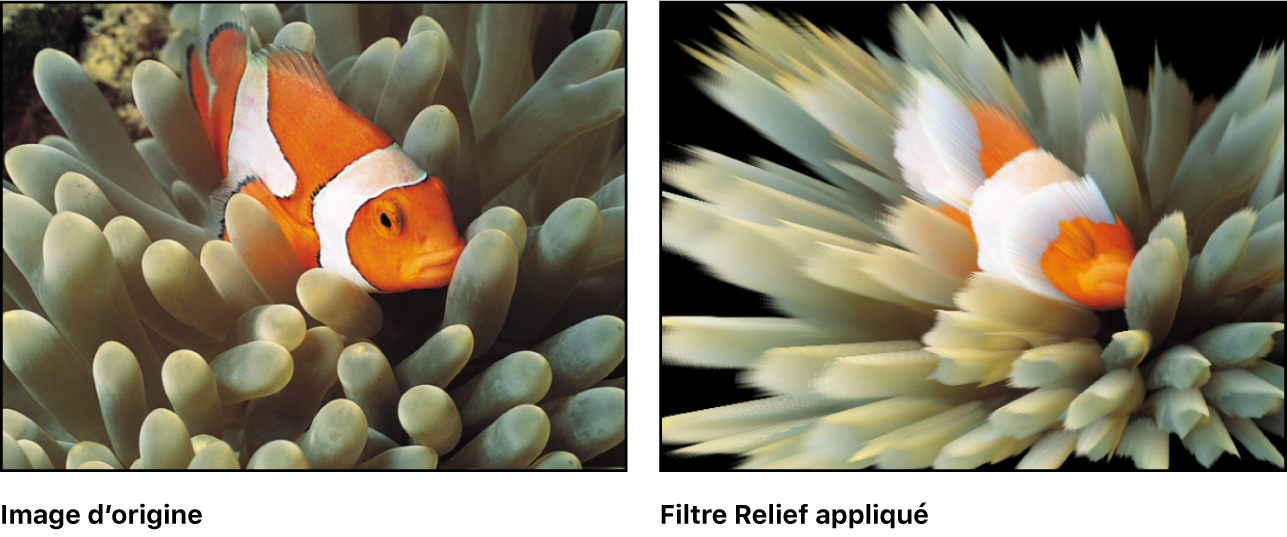 Canevas affichant l'effet du filtre Relief