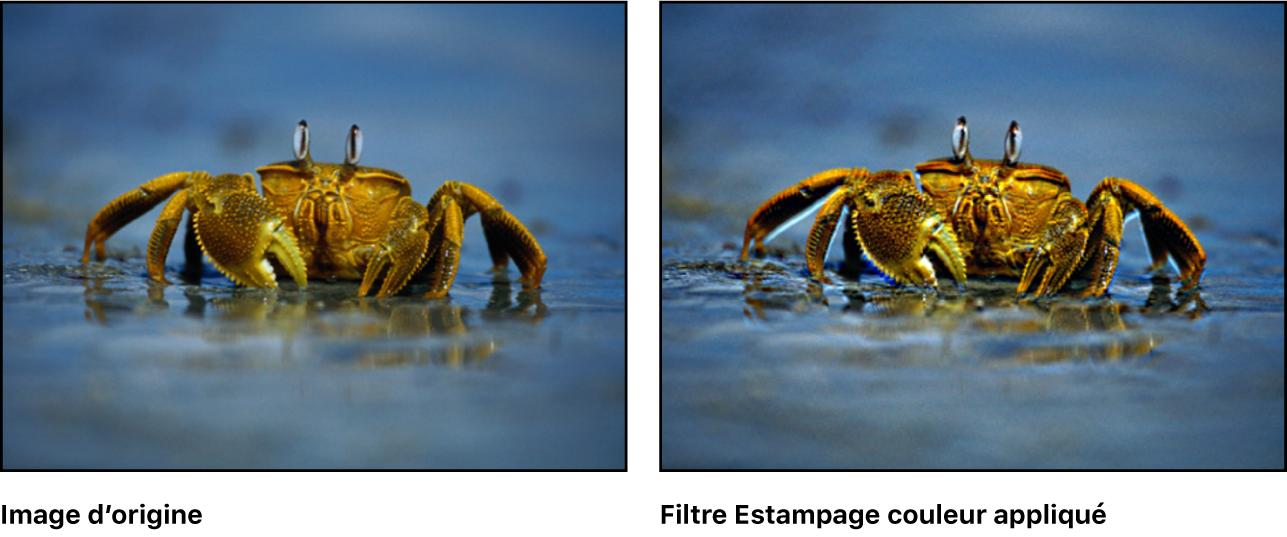 Canevas affichant l'effet du filtre Estampage couleur