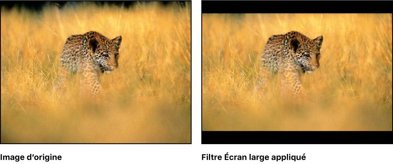 Canevas affichant l'effet du filtre Écran large