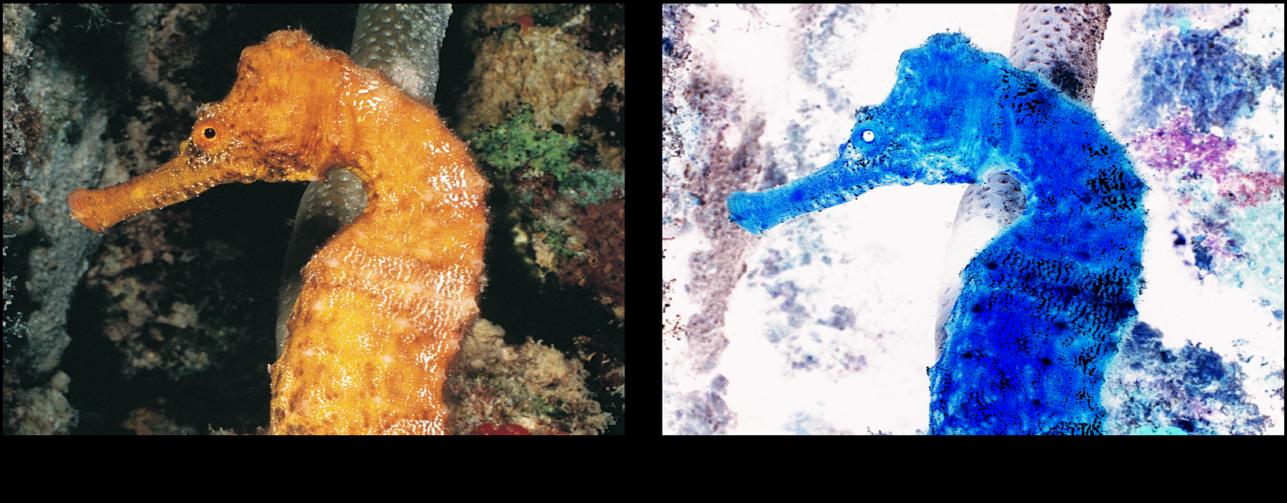 Canevas affichant l'effet du filtre Inverser