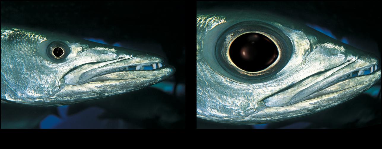 「魚眼」フィルタの効果を示すキャンバス