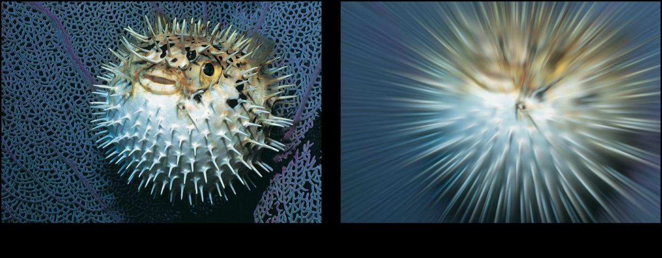 「ブラー(ズーム)」フィルタの効果を示すキャンバス