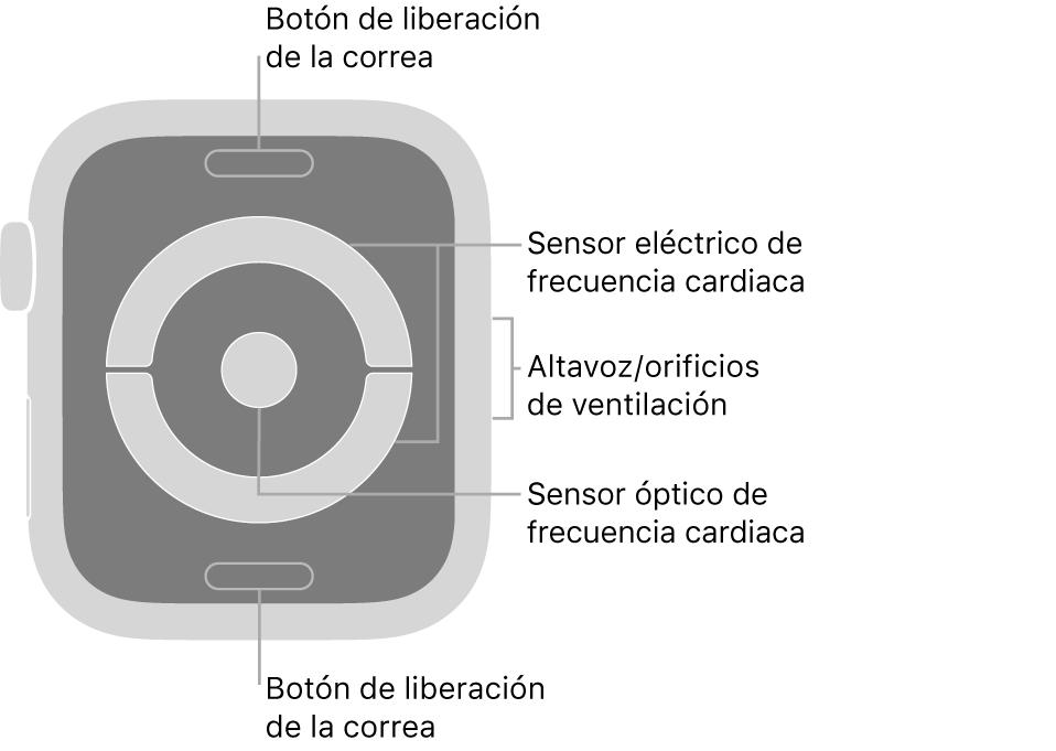 La trasera del AppleWatch Series4 y el AppleWatch Series5, con los botones de liberación de la correa arriba y abajo, los sensores eléctricos de frecuencia cardiaca y el sensor óptico de frecuencia cardiaca en el medio, y el altavoz/orificios de ventilación en el lateral del reloj.