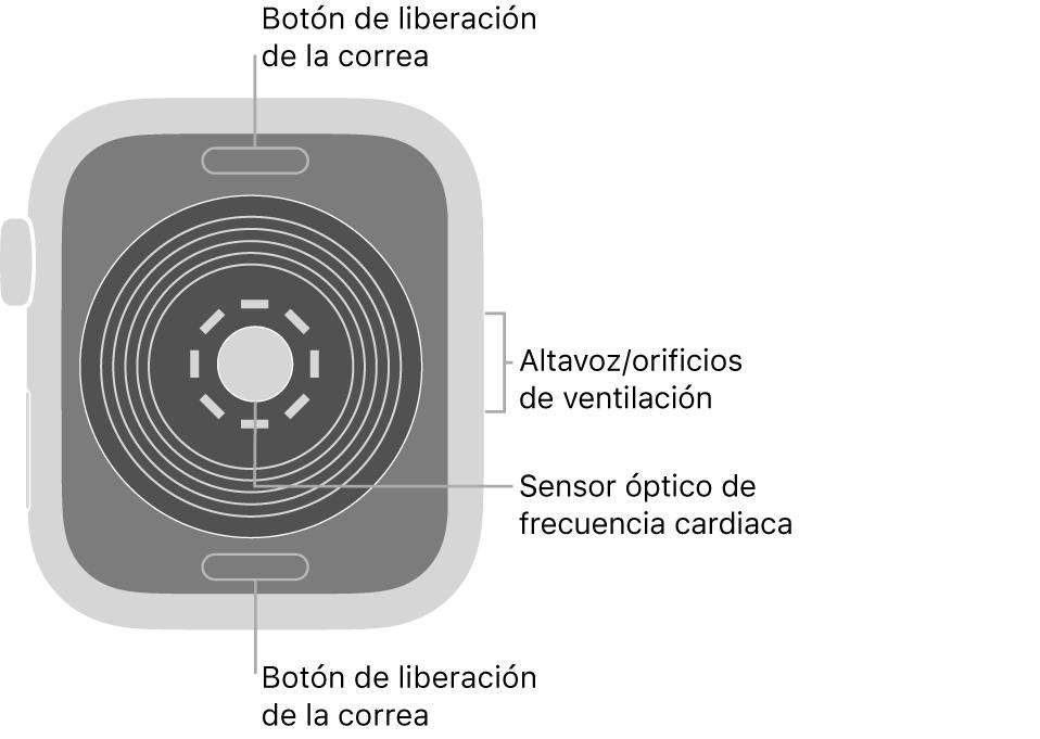 La trasera del AppleWatchSE, con los botones de liberación de la correa arriba y abajo, el sensor óptico de frecuencia cardiaca en el medio, y el altavoz/orificios de ventilación en el lateral.